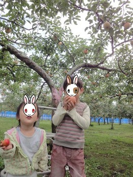 りんご狩り#3.JPG