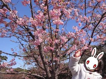 エノシマトレジャー#03.JPG